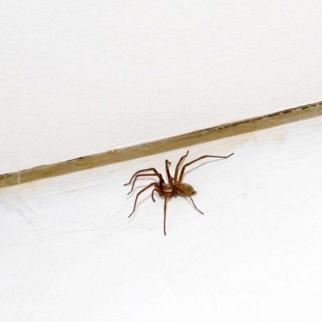 Qu'est-ce qui attire les araignées dans la maison ?